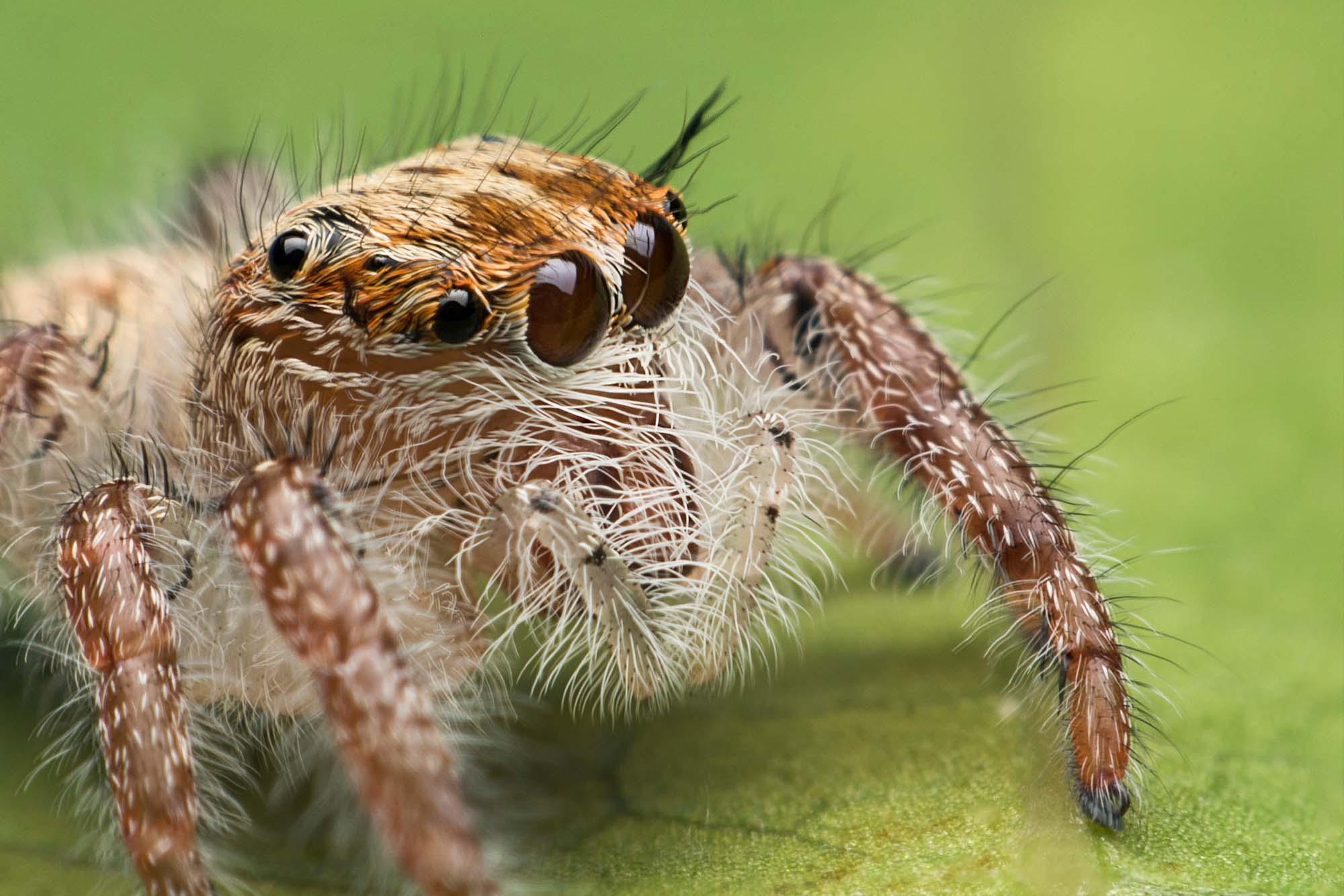Los huracanes favorecen a las arañas más agresivas